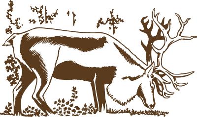 Capfaune le renne des for ts d 39 europe - Dessiner un renne ...